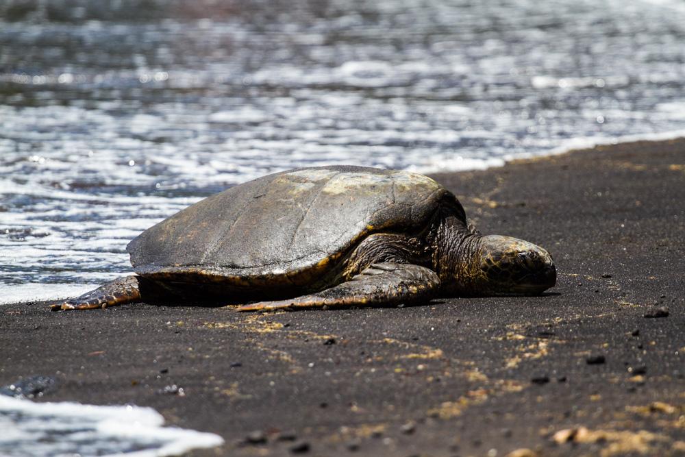 Black sand beach - Triallan - Ironman Hawaii - Allan Hovda-13