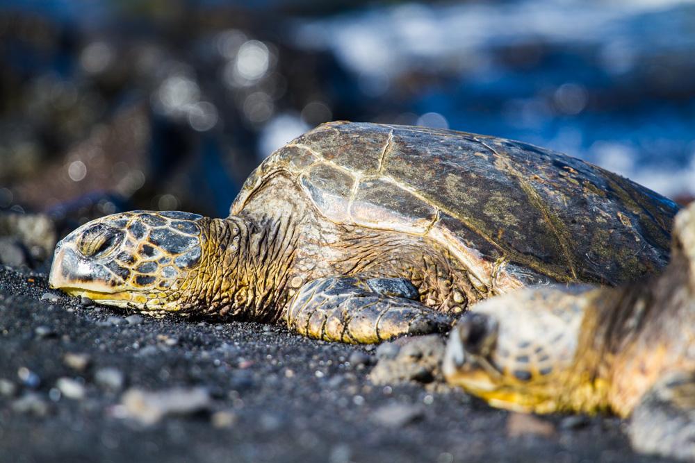 Black sand beach - Triallan - Ironman Hawaii - Allan Hovda-2