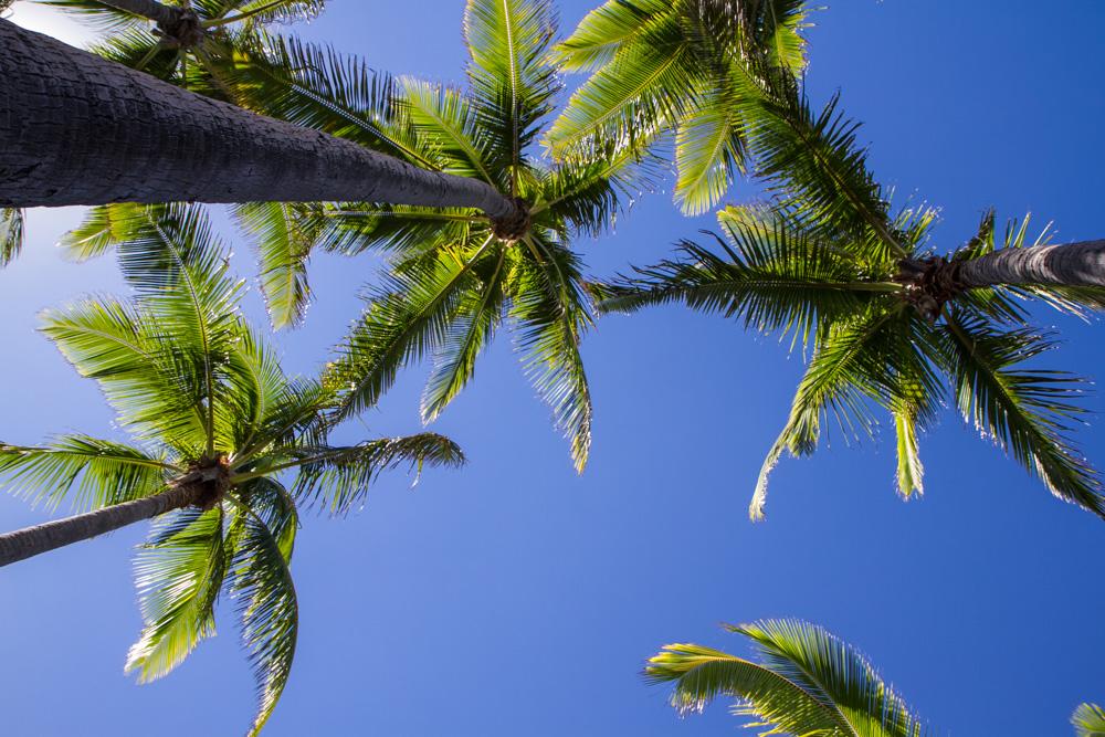 Black sand beach - Triallan - Ironman Hawaii - Allan Hovda-5
