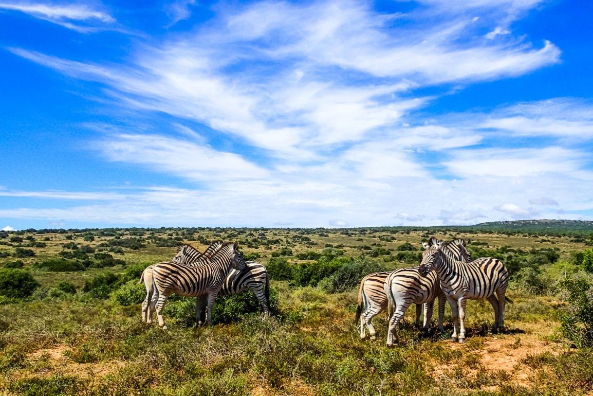 Reiserapport – Ironman South Africa – Port Elizabeth og GardenRoute