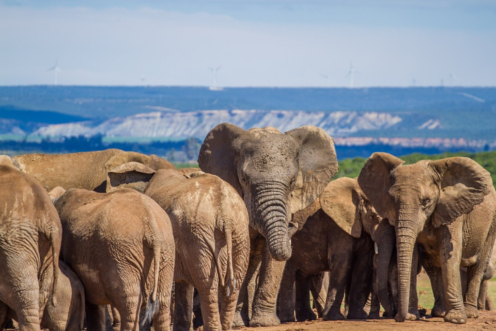 Triallan - Addo Elephantpark - Ironman South Africa-3