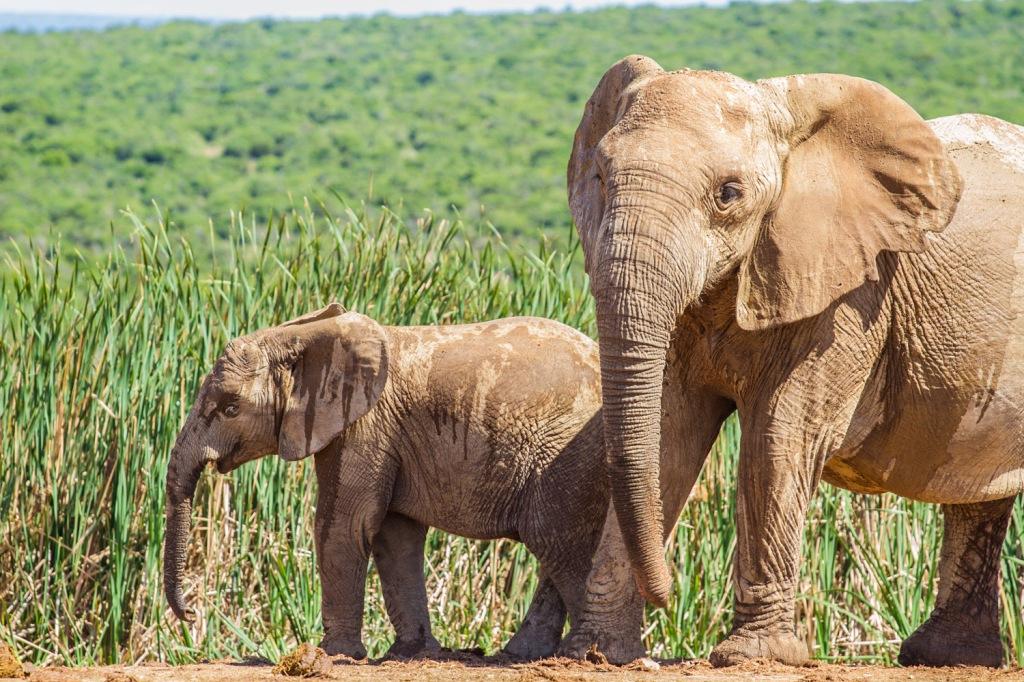 Triallan - Addo Elephantpark - Ironman South Africa-4