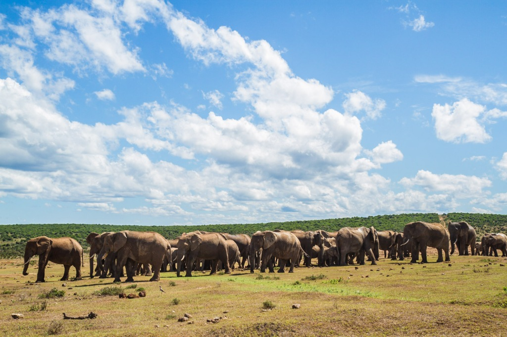 Triallan - Addo Elephantpark - Ironman South Africa-5