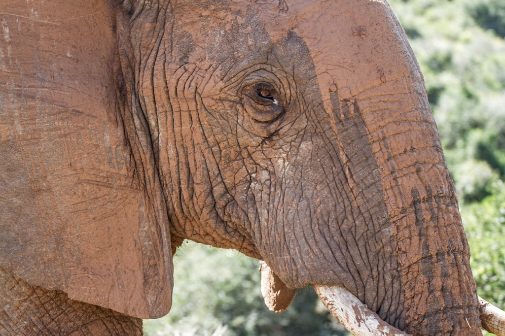Triallan - Addo Elephantpark - Ironman South Africa-8