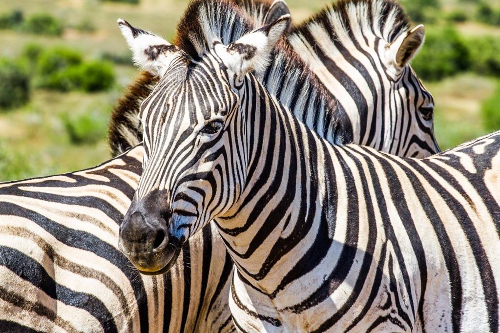 Triallan - Addo Elephantpark - Ironman South Africa