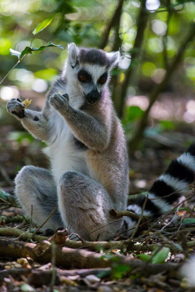 Triallan - Monkeyland - Ironman South Africa - Garden Route-2