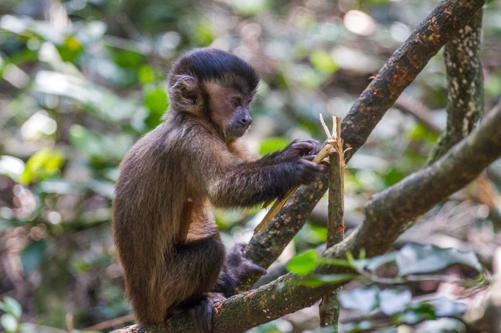 Triallan - Monkeyland - Ironman South Africa - Garden Route-4