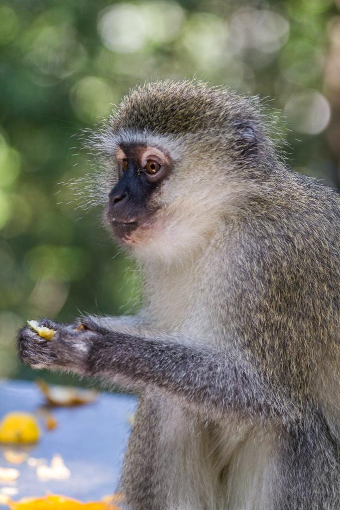 Triallan - Monkeyland - Ironman South Africa - Garden Route-6