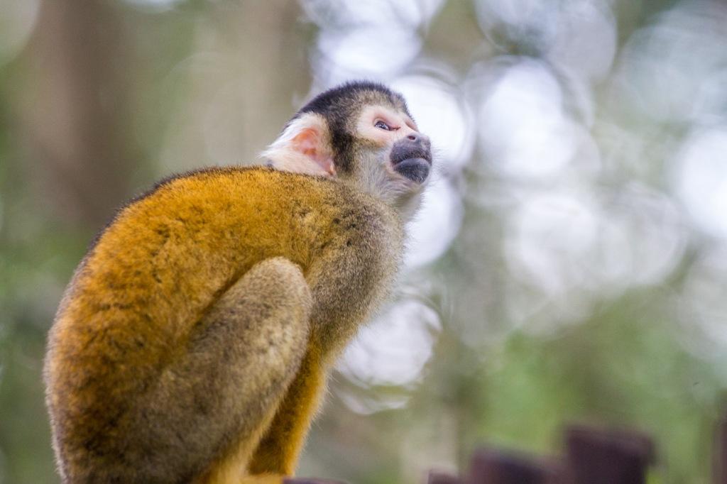 Triallan - Monkeyland - Ironman South Africa - Garden Route-8