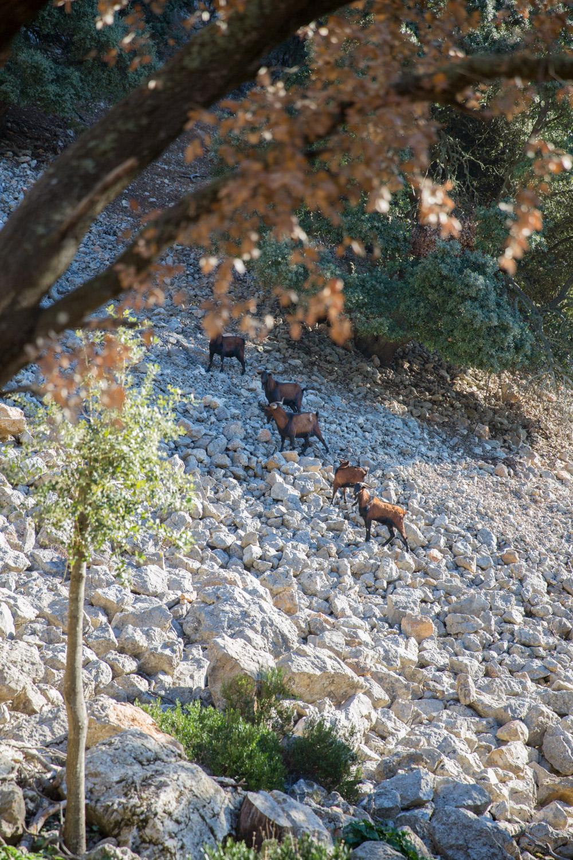 Triallan - Allan Hovda - Mallorca - Terrengløp - Fjelltur - Hiking-5