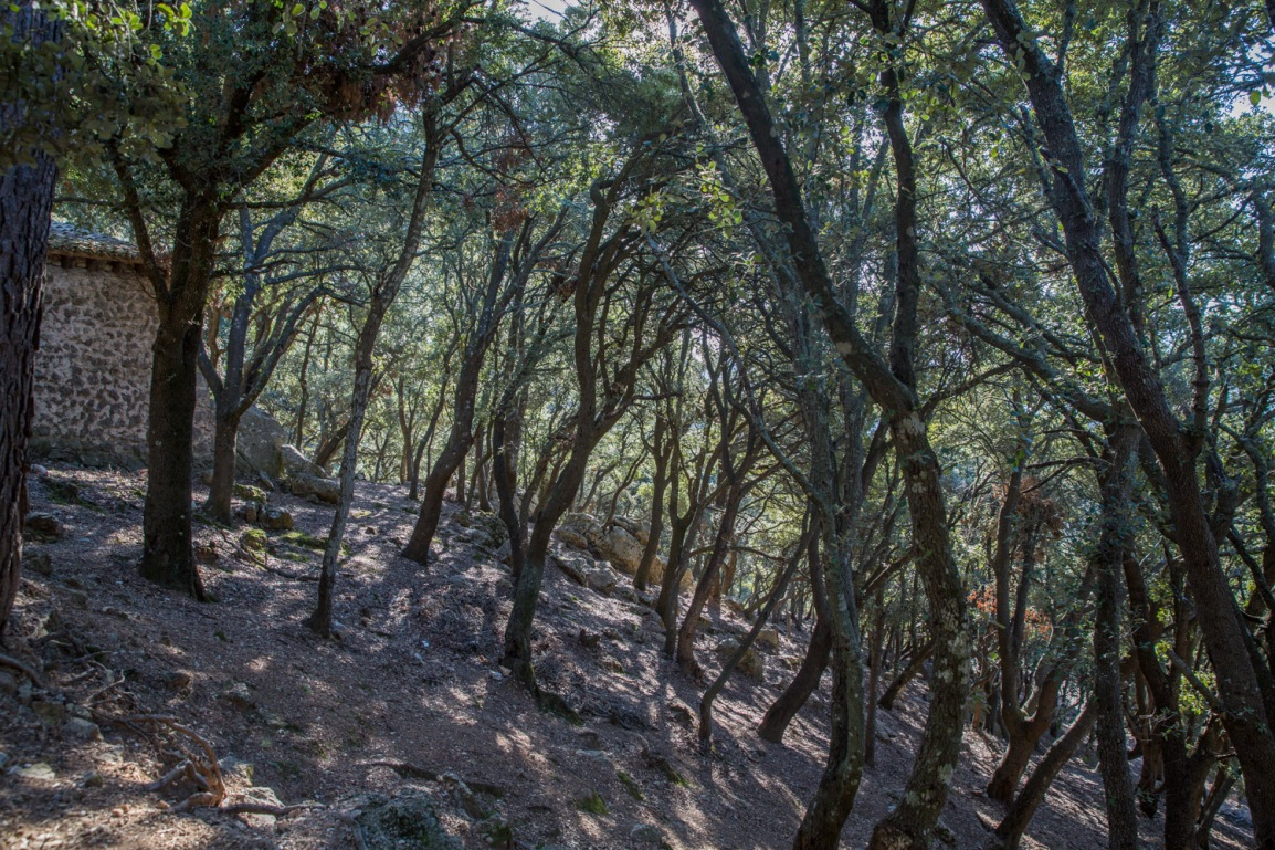 Triallan - Allan Hovda - Mallorca - Terrengløp - Fjelltur - Hiking-6