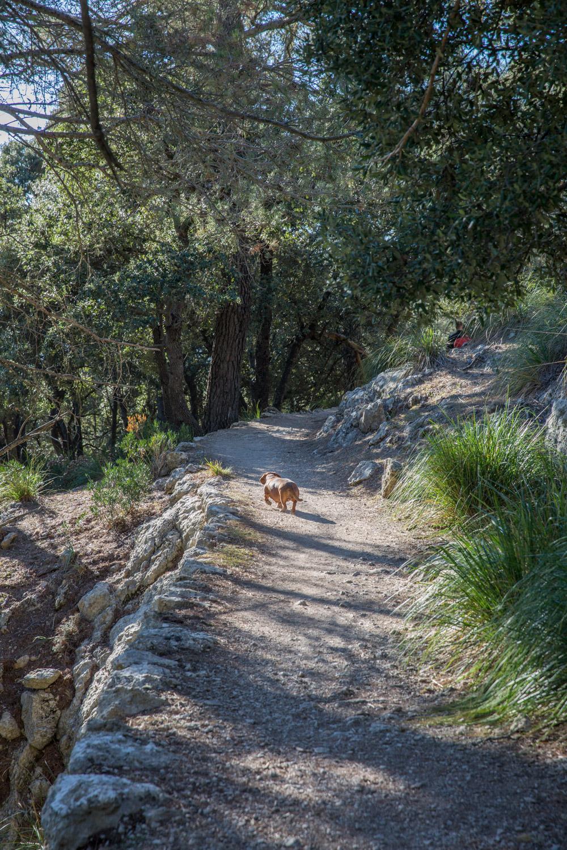 Triallan - Allan Hovda - Mallorca - Terrengløp - Fjelltur - Hiking-7